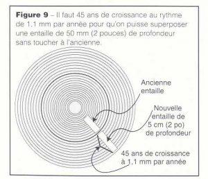 perforación maple