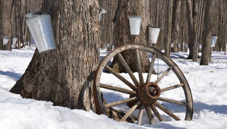 De la perforación del árbol a la recolección
